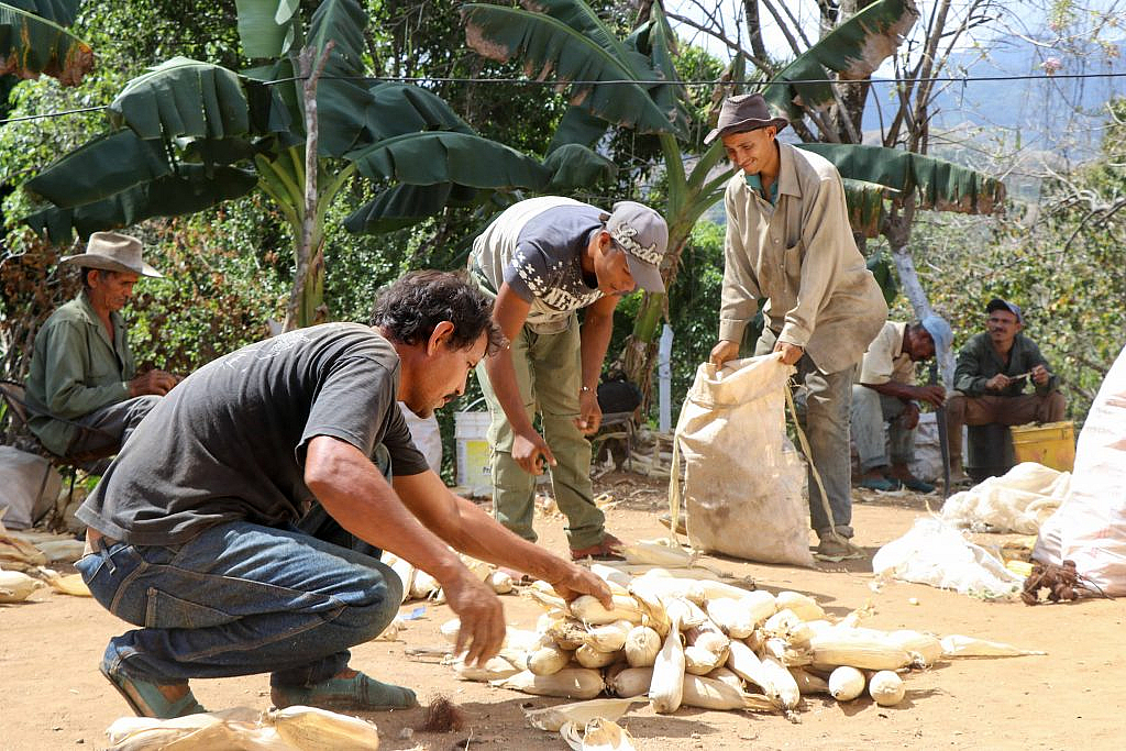 Cartera agrícola del BT registró un incremento interanual de 497% entre enero 2019-2020